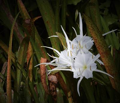 Photograph - Spider Lily In Color by Warren Thompson