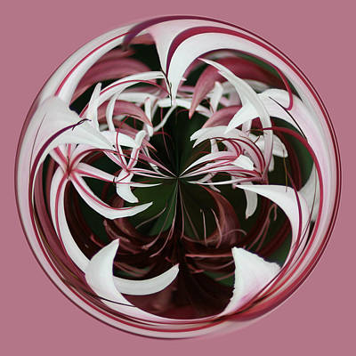 Art Print featuring the photograph Spider Lily Orb by Bill Barber