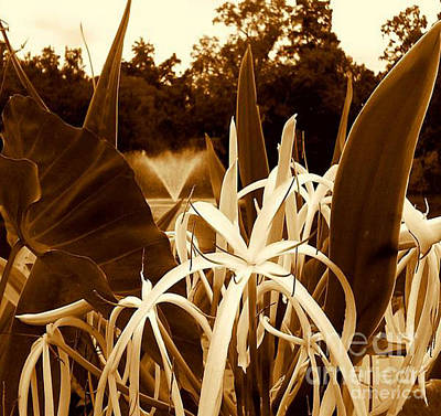 Photograph - Spider Lilys At Audubon Park At The Lagoon In New Orleans Louisiana by Michael Hoard