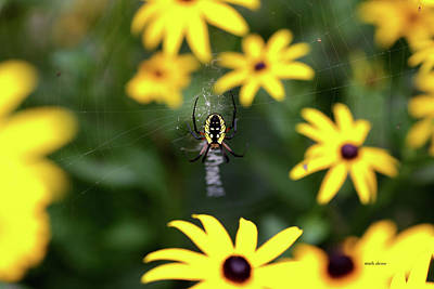 Photograph - Spider by Mark Alesse