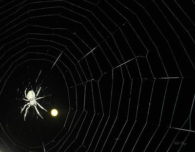 Photograph - Spider Moon by Wild Thing