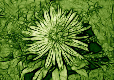 Photograph - Spider Mum In Green by Kathleen Stephens