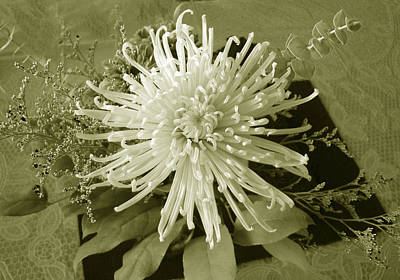 Photograph - Spider Mum In Sepia by Kathleen Stephens