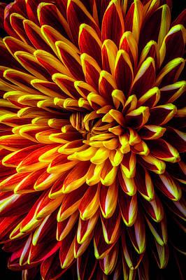 Maze Art Photograph - Spider Mum Maze by Garry Gay