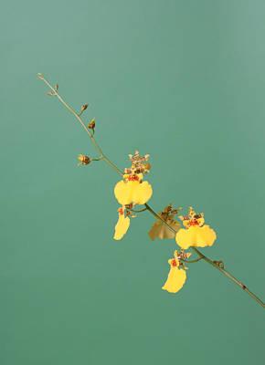 Spider Orchid Art Print by Lynn Berreitter
