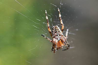 Photograph - Spider by Paulo Goncalves