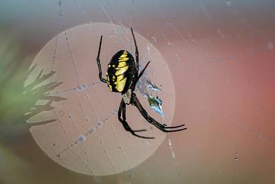 Photograph - Spider Portrait by Robert Potts