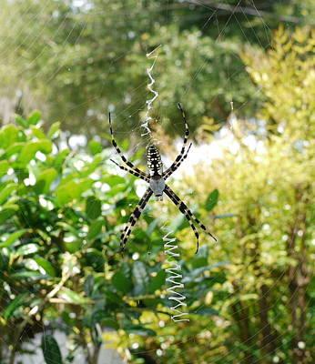 Spider Signals Art Print by Bea Godwin