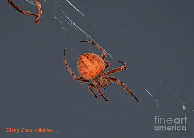 Photograph - Spider Spinning On Autumn Leaves by Susan Wiedmann