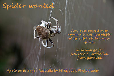 Photograph - Spider Wanted  by Miroslava Jurcik