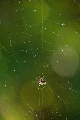 Photograph - Spider Web 1 by George Cabig