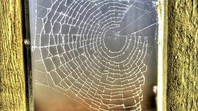 Photograph - Spider Web 2 by Jerry Sodorff