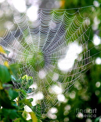 Photograph - Spider Web 2 by Sheri LaBarr