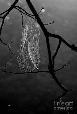 Photograph - Spider Web by Alana Ranney
