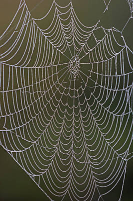 Photograph - Spider Web And Morning Dew by Juergen Roth