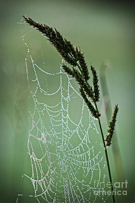 Photograph - Spider Web Art By Nature by Ella Kaye Dickey