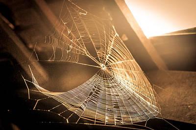 Spiderweb Photograph - Spider Web by Art Spectrum