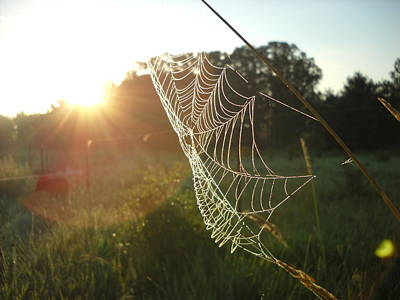 Photograph - Spider Web At Sunrise by Kent Lorentzen