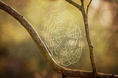 Photograph - Spider Web Between The Limbs by Debra Martz