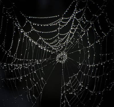 Spider Photograph - Spider Web Black And White by Zina Stromberg