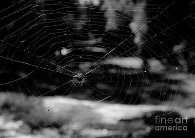 Photograph - Spider Web Black White by Andrea Anderegg
