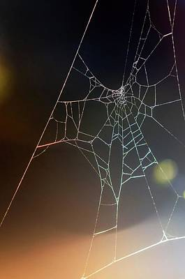 Photograph - Spider Web by Carlos Caetano