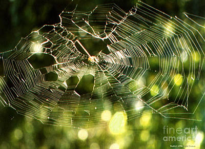 Photograph - Spider Web by Cindy Murphy - NightVisions
