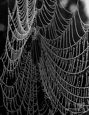 Photograph - Spider Web Close Up by Alana Ranney