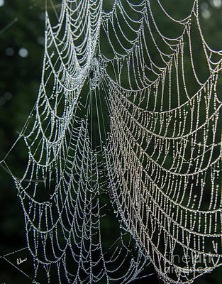 Photograph - Spider Web Dew II by Alana Ranney