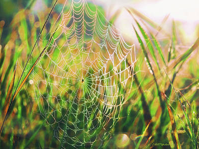 Digital Art - Spider Web Glowing In The Morning Sun by Ericamaxine Price