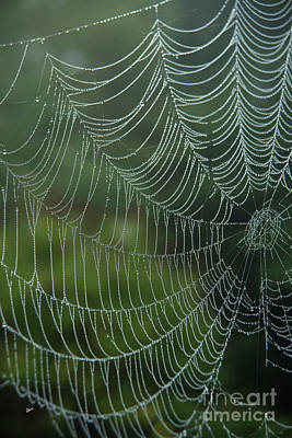 Photograph - Spider Web II by Alana Ranney