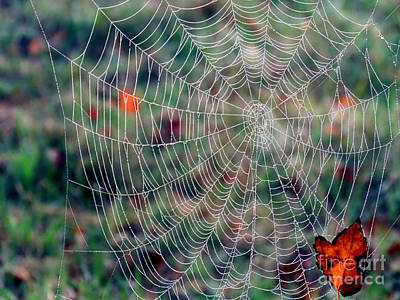 Photograph - Spider Web In Autumn by Janice Drew