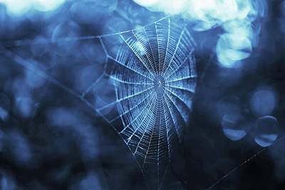 Photograph - Spider Web In Blue by Brooke T Ryan