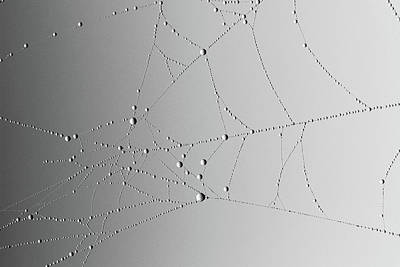 Photograph - Spider Web In Fog 6 by Mary Bedy
