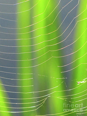 Photograph - Spider Web In Light by Ron Tackett