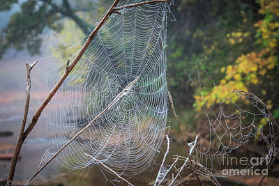Photograph - Spider Web In The Fog by Richard Smith