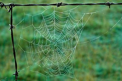 Spider Web In The Springtime Art Print by Douglas Barnett