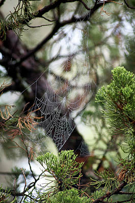 Photograph - Spider Web In Tree by Willard Killough III