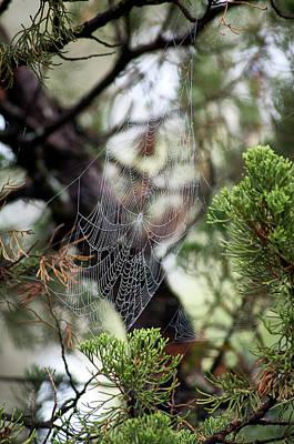 Photograph - Spider Web In Tree by Willard Killough III