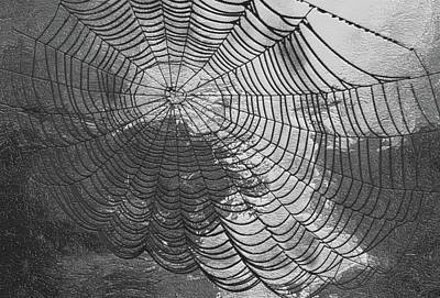Spider Web Art Print by Jack Zulli