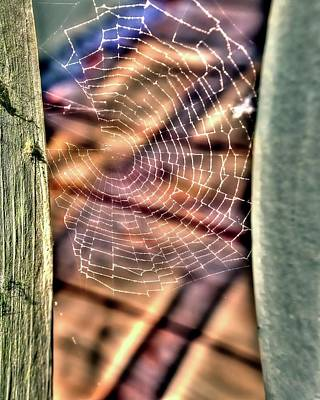 Jerry Sodorff Royalty-Free and Rights-Managed Images - Spider Web by Jerry Sodorff
