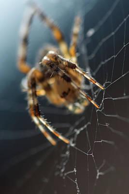 Spider Web Light Art Print by Irina Safonova