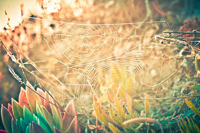 Photograph - Spider Web Magic by Priya Ghose