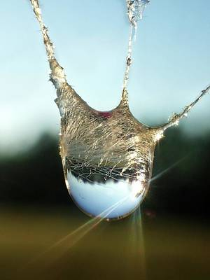 Photograph - Spider Web Raindrop by Lorella Schoales