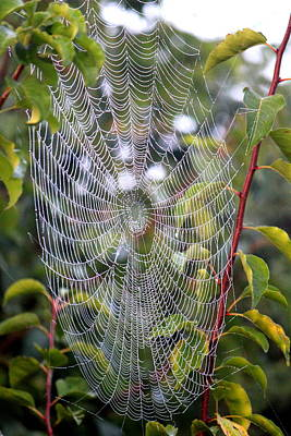 Photograph - Spider Web by Sheri LaBarr