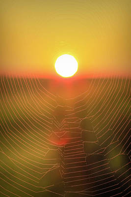 Photograph - Spider Web Sunrise by Dan Sproul