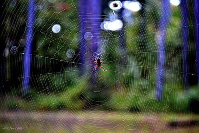 Photograph - Spider Web by Tara Potts