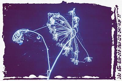 Digital Art - Spider Web Weed by Bartz Johnson