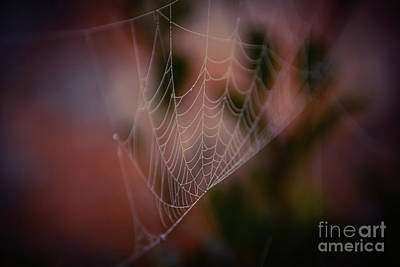 Photograph - Spider Web With An Autumn Kiss - Macro by Adrian DeLeon