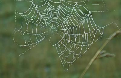 Spider Web With Dew Drops Art Print by Douglas Barnett